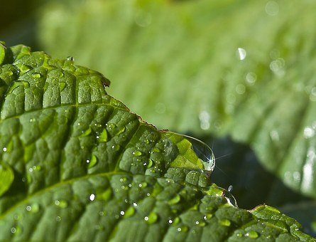 Leaf, Green, Leaf Dahlias, Water, Closeup, Nature
