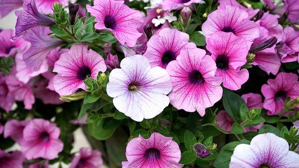 Flowers, Pink, Pink Flowers, Nature, Petal, Plant