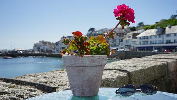 Plant, Pot, Flower, Growth, Potted, Fresh, Flowerpot