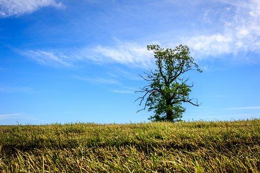 Tree, Single, Green, Field, Horizon, Nature, Sky