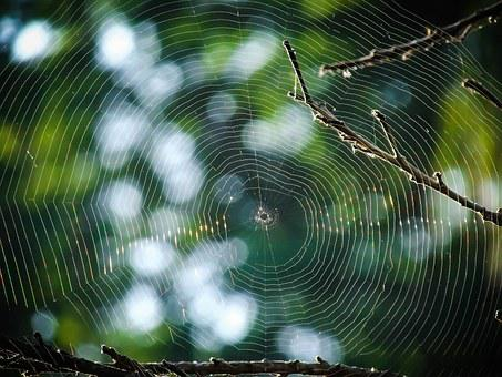 Spiderweb, Web, Spider, Tree, Trap, Nature, Cobweb