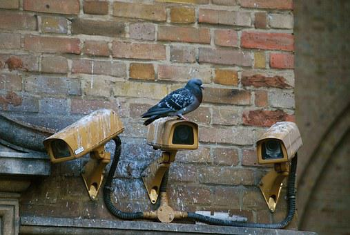 Camera, Spy, Pigeon, Surveillance, Security, Video