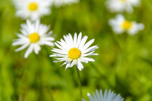 Absolutely Wonderful Daisies, Summer, The Background