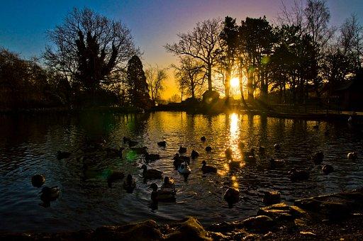 Sunrise, Sunset, Ducks, Nature, Sky, Sun, Water