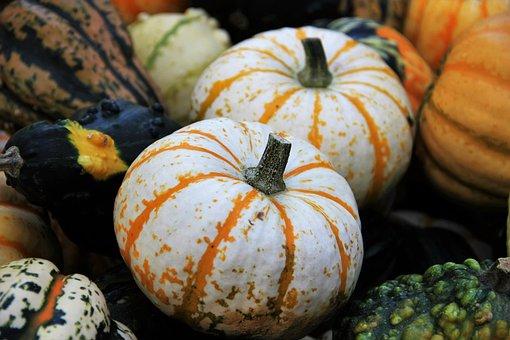 Thanksgiving, Decorative Squashes