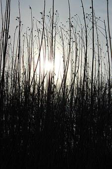 Contrast, The Sun, Black, The Rays, In The Morning