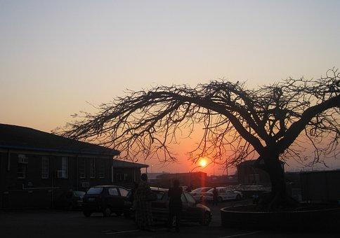 Sunrise, Dawn, Early Morning, Umbrella Shaped Tree