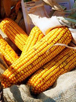 Arable, Harvest, Thanksgiving, Eat, Field, Vegetables