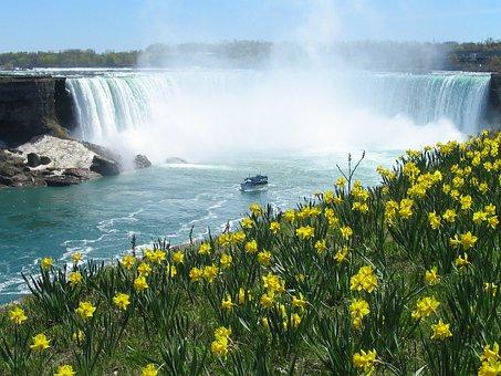 Niagara Falls, Waterfall, Horseshoe, Daffodils, Spring