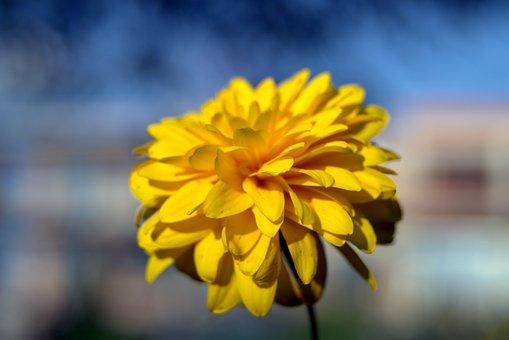 Yellow Flower, Flower, Bile, Yellow, The Petals