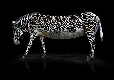 Zebra, Animal, Zoo, Africa, Striped, Zebra Crossing