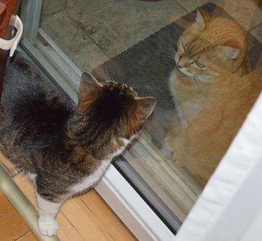 Kitten, Face To Face, Szemez
