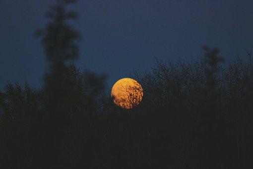 Artistic Conception, Moon, Sun, Plant, The Scenery
