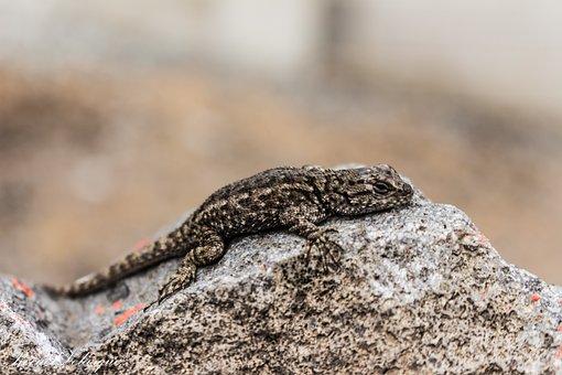 Lizard, Peace, Beauty