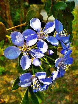 Flowers, Purple, Nature, Cho, Plant, Pollen, Refreshing