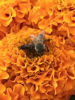 Bees, Flowers, Orange, Pollen, Blossom, Season, Design