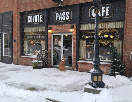 Cafe, Snow, Dog, Winter