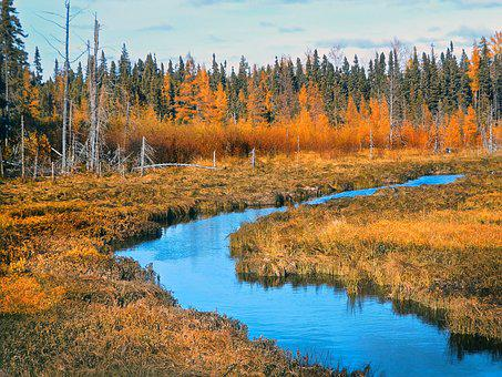 Autumn, Bog, Nature, Outdoor, Forest, Landscape, Color
