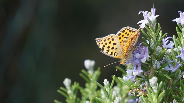Butterfly, South, Nature, Summer, Nature Photography