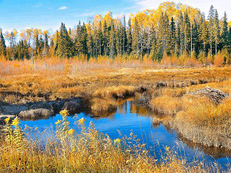 Autumn, Bog, Nature, Forest, Landscape, Marsh, Scenery