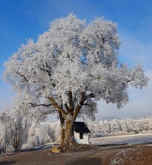 Winter, Snow, Wintry, Cold, White, Nature, Winter Dream