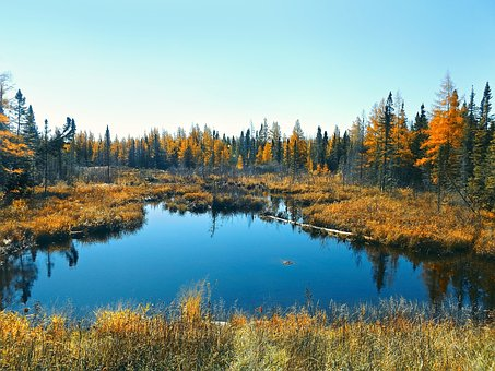 Autumn, Bog, Nature, Forest, Marsh, Wetland, Water