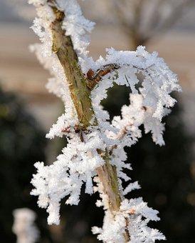 Winter, Frost, Plant, Ice, Wintry, Frozen, Winter Magic