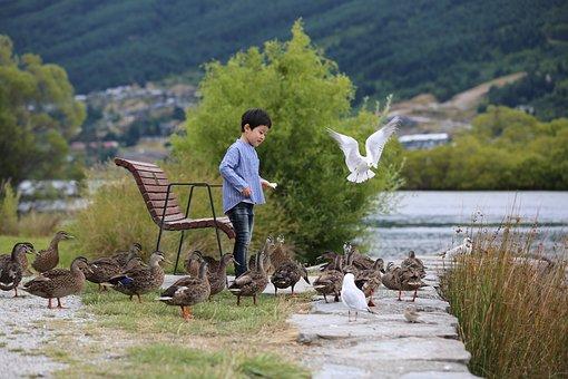Duck, Birds, Feed, Seagull, New Zealand