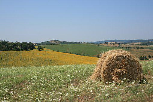 Sun, Maremma, Yellow, Green, Summer, Italy, Tuscany