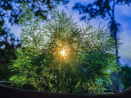 Sunset, Sun Rays, Sunlight, Beam, Ray, Sunbeam, Nature