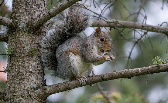 Squirrel, Eating, Nature, Wildlife, Animal, Wild, Brown