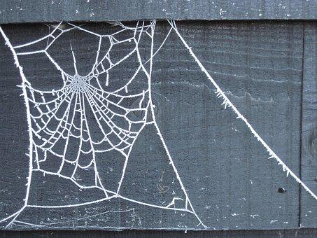 December, Web, Winter, Ice, White, Frost, Design