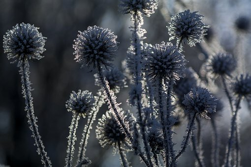 Winter, Wintry, Nature, Frost, Shrubs, Cold, Frozen