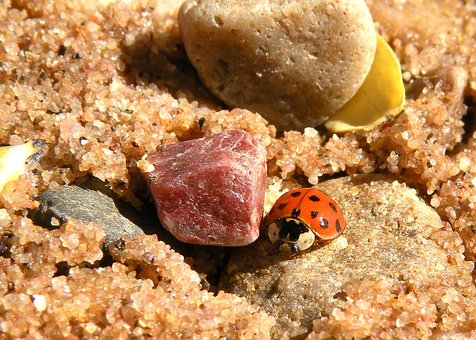 Ladybug, Close Up, Macro, Micro, Sand, Beach, Rocks