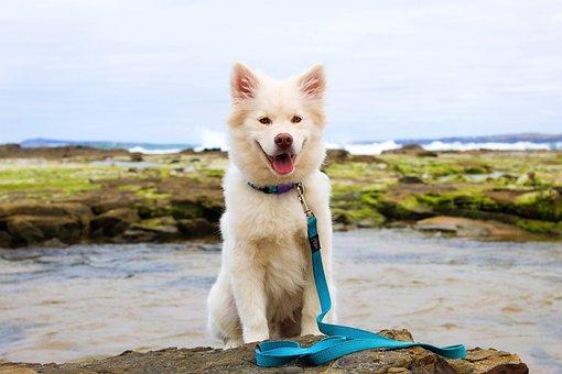 Dog, Puppy, Beach, Water, Cute, Summer, Moss, Cream