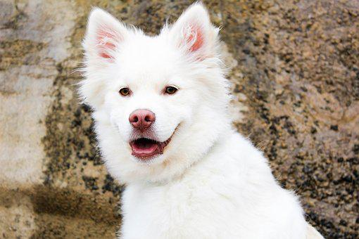 Dog, Puppy, Beach, Rock, Cute, Summer, Cream, White