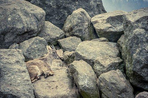 Capricorn, Rock, Stones, Animal, Mountains, Alpine Ibex