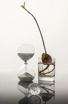 Time, Glass, Sprout, White, Sand, Clock