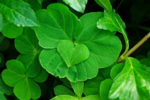 Plant, Heart, Four-leaf Clover