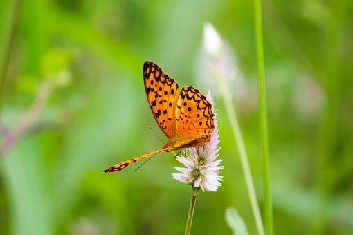 Butterfly, Caterpillar, Nature, Animal, Natural, Garden
