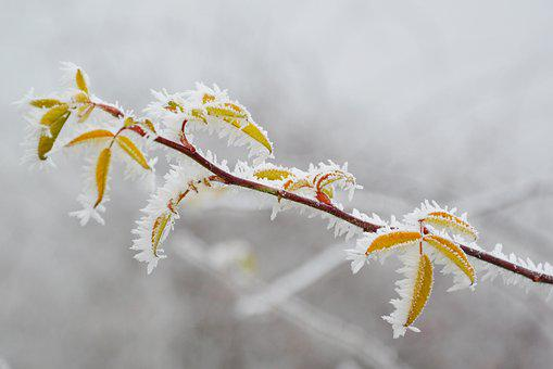 Rime, Frost, Hoary, Winter, Cold, Ice, Nature, Frozen