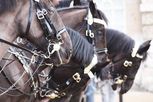 Horses, London, England