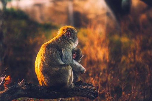 Monkey, Mother, Baby, Child, Cute, Sitting, Portrait