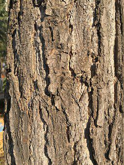 Wood, Bark, Brown, Wild, Stem, Forest, Plants, Surface