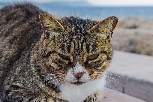 Cat, Stray, Animal, Looking, Face, Homeless, Sadness