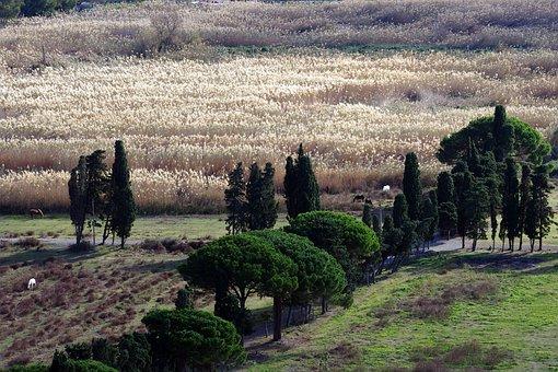 Reeds, Calabria, Campaign, Italy, Praia A Mare