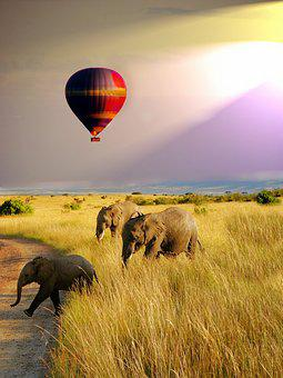 Balloon, Safari, Elephant, Wildlife, Nature, Fun, Wild