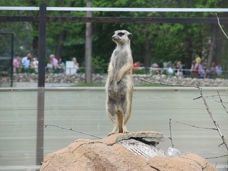 Surrikatov, Animal, Funny, Zoo