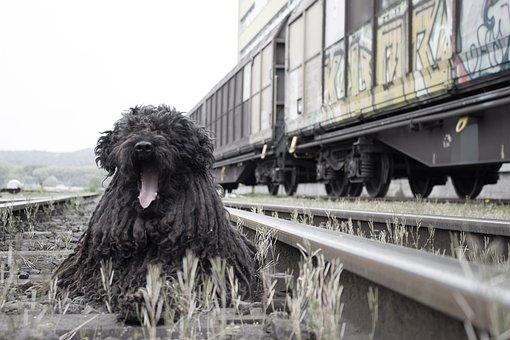 Dog, Animal, Portrait, Railway Station, Rails, Train