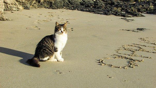 Beach, Cat, Sea, Sand, Animal, Cute, Posing, Cyprus